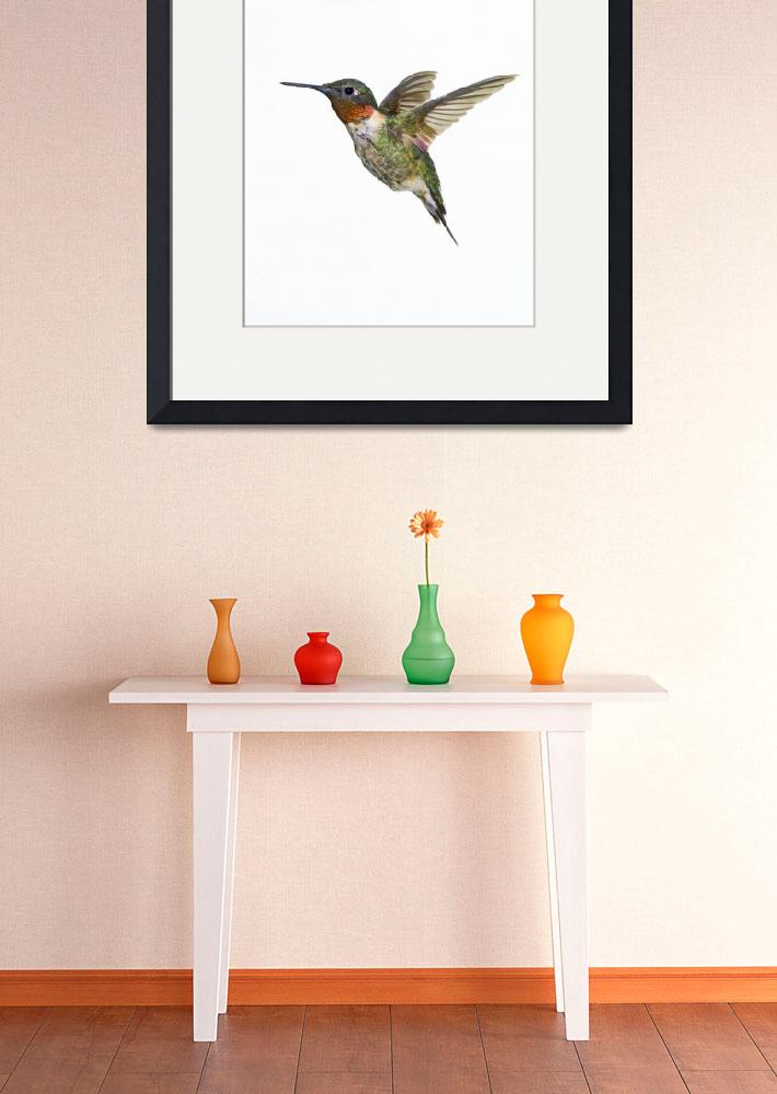 """Ruby-Throated Hummingbird&quot  by DesignPics"