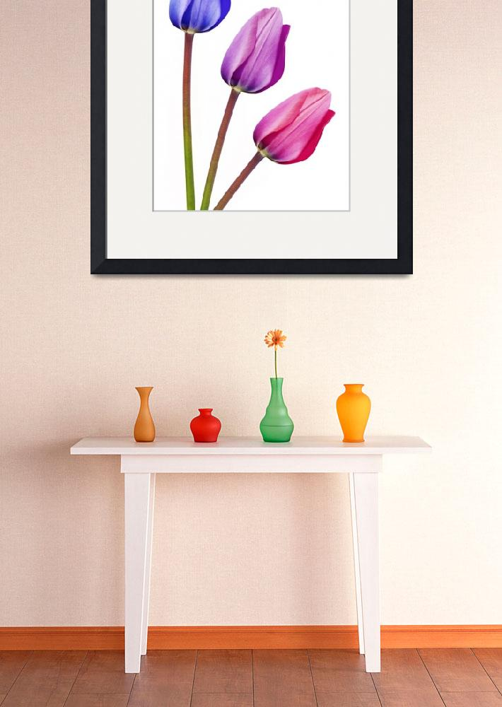 """Trio of Tulips Purple Lilac Pink&quot  by NatalieKinnear"