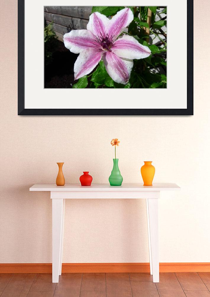 """Clematis series(2)&quot  (2009) by FlowerShotsbyZaralee"