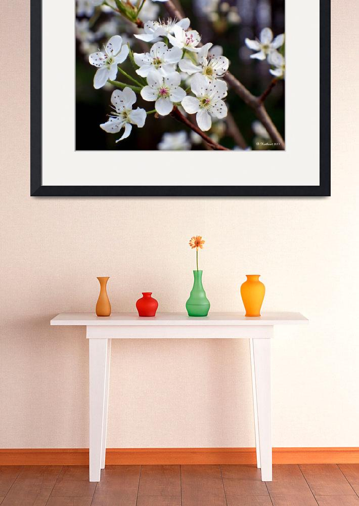 """Pear Tree Blossoms II&quot  (2011) by bettynorthcutt"