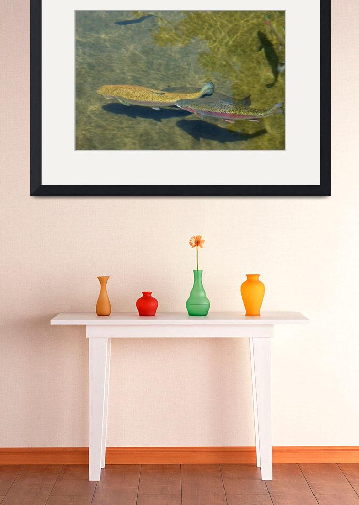 """Trout Art Prints Canvas Fishing Fishermen&quot  (2014) by BasleeTroutman"