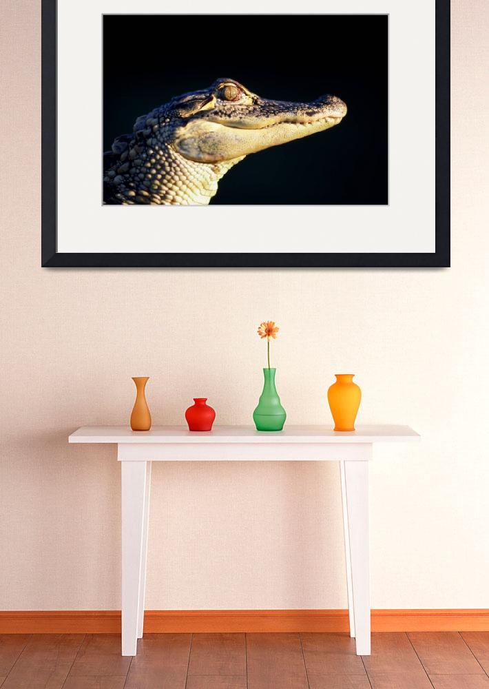 """American alligator (Alligator mississipiensis)&quot  by Panoramic_Images"
