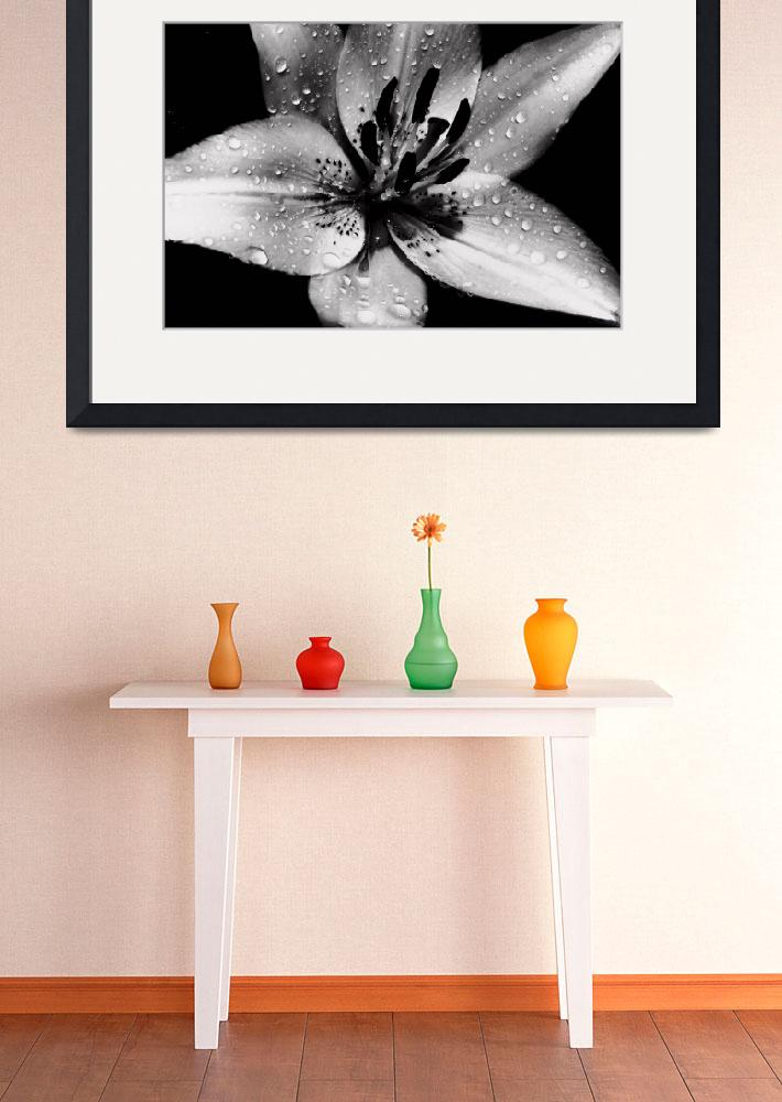 """Lily In Black And White&quot  (2010) by bavosiphotoart"