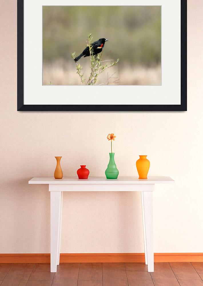 """Red Winged Blackbird in a Marsh&quot  (2012) by rhamm"