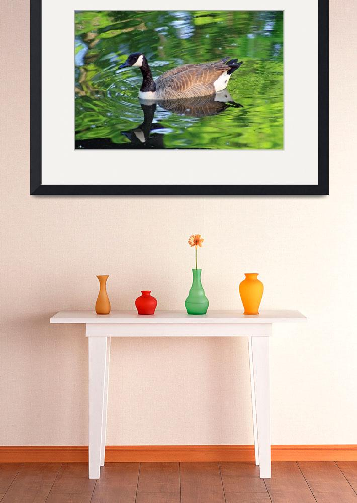 """Canada Goose on Green Lake&quot  (2012) by KsWorldArt"