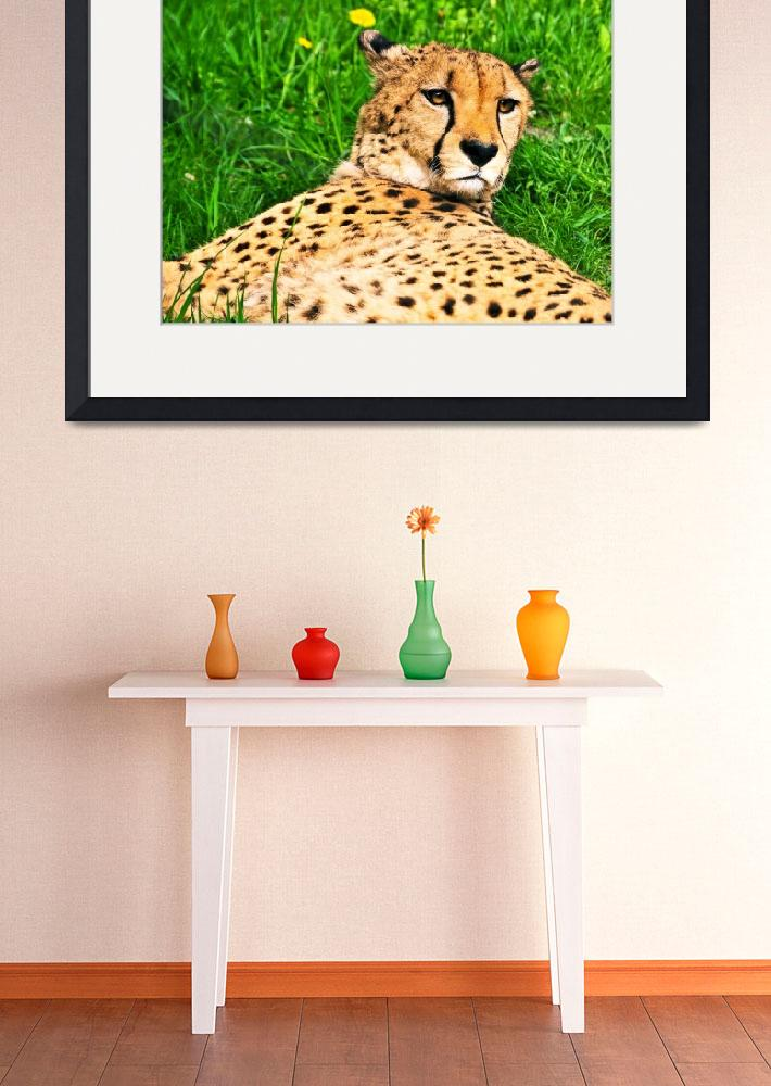 """Relaxed Cheetah&quot  (2013) by amira"