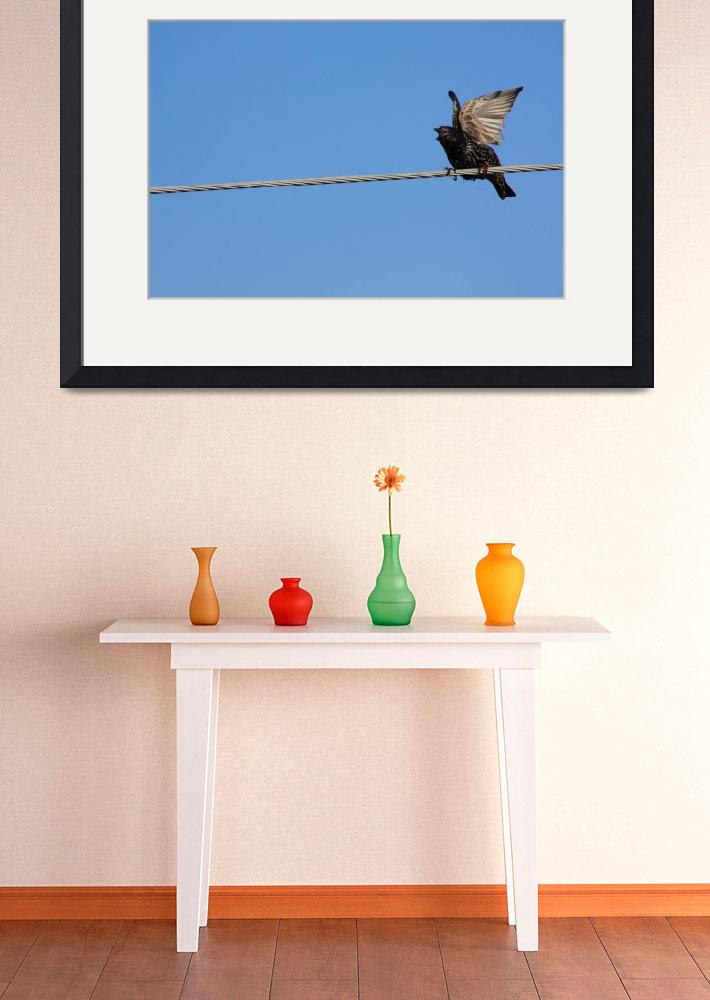 """Bird on a wire (starling)&quot  (2010) by Albertphoto"