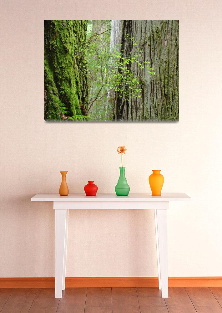 """Redwood Trees art prints Big Redwoods artwork&quot  (2014) by BasleeTroutman"