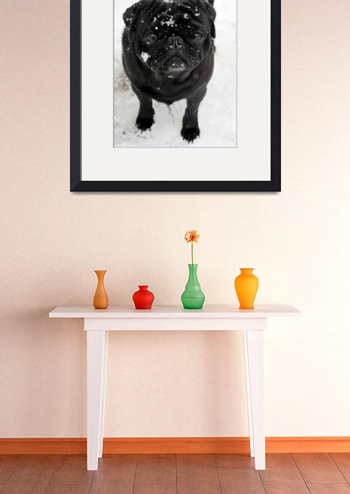 """Iggy the Black Pug&quot  (2010) by iggyfan"