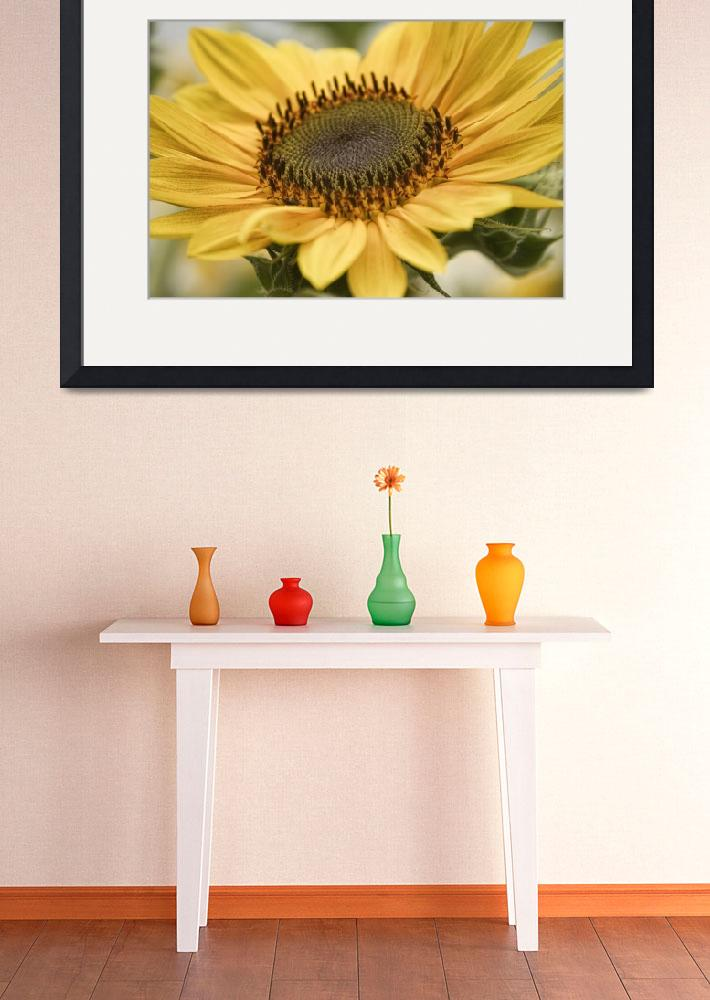 """Sunflower Bloom&quot  (2011) by lightningman"