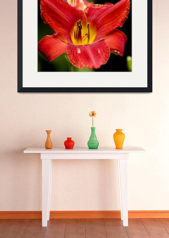 """Red Lily&quot  (2010) by markwuttke"