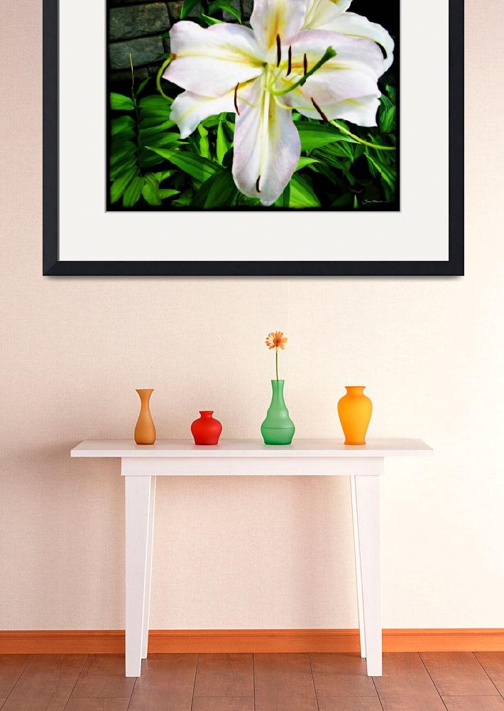 """White Madonna Lily&quot  (2011) by jbjoani2"