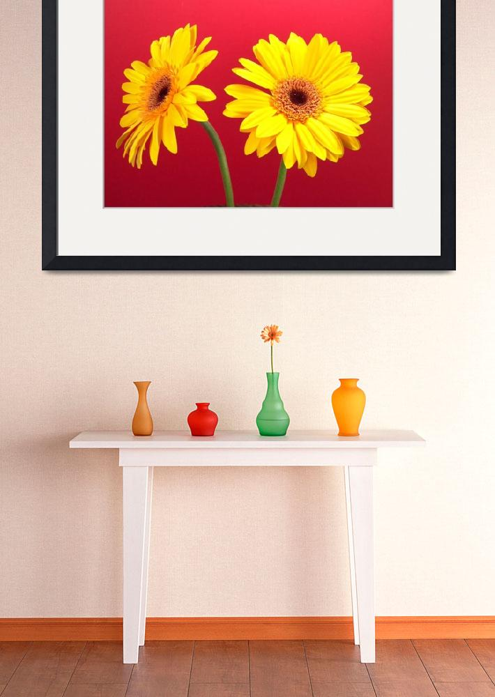 """Yellow Gerbera Daisies Delight On Red&quot  (2006) by Infomages"