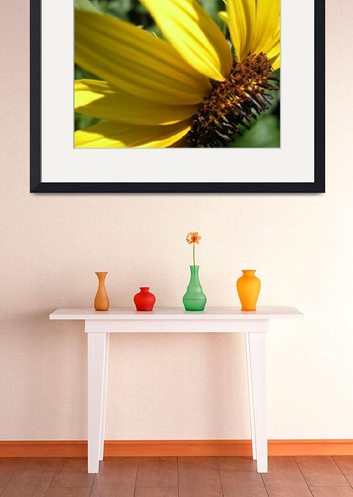 """Sunflower&quot  (2008) by Peay4Pics"