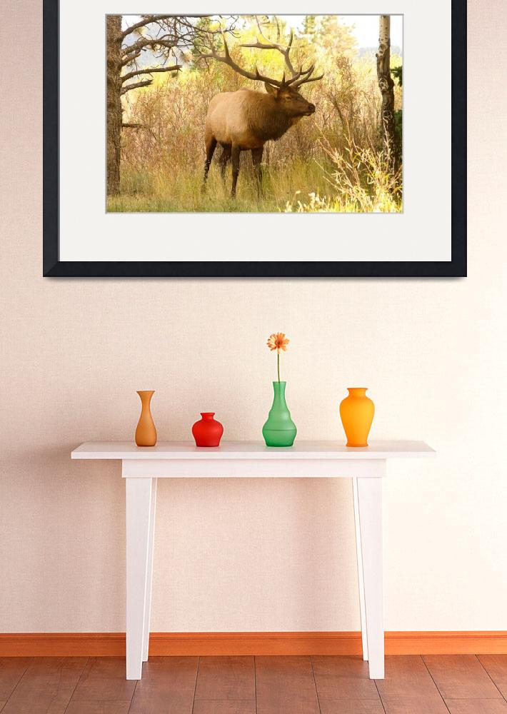 """Bull Elk in the Brush&quot  (2011) by lightningman"