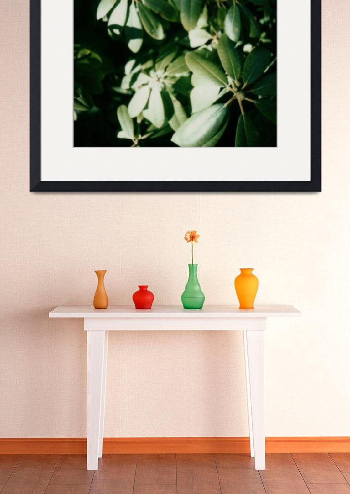 """Umbrella Plant Polaroid&quot  (2009) by terynrobinson"