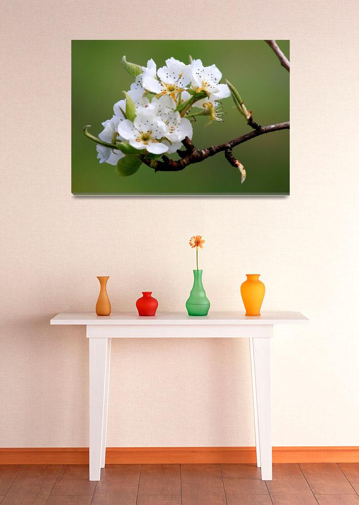 """Apple Blossoms&quot  (2014) by Groecar"