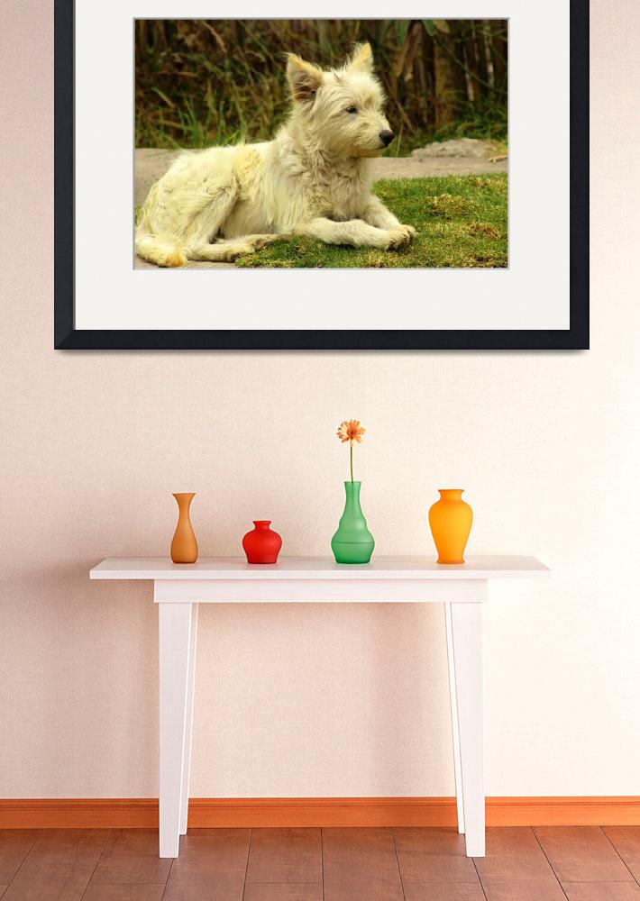 """White Shaggy Dog&quot  (2014) by rhamm"