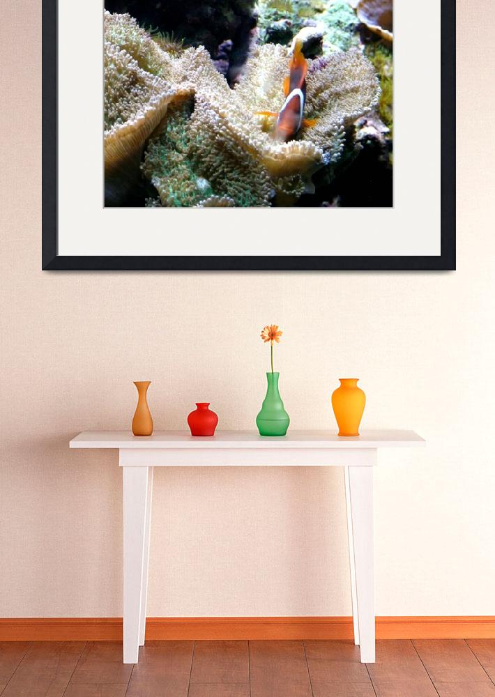 """My Underwater Home (Clown Fish)&quot  (2009) by paulyworksfineart"