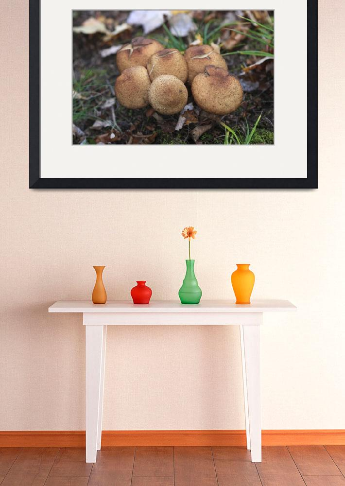 """Mushrooms 2&quot  (2010) by andreifilippov"