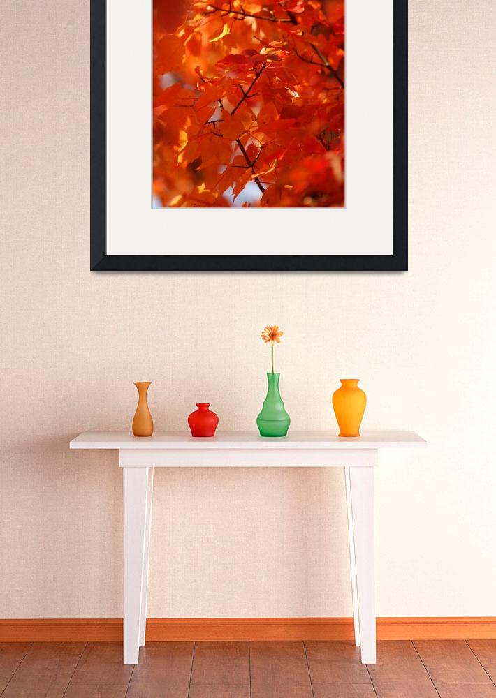 """Autumn Orange Sunshine&quot  (2009) by christopherboswell"