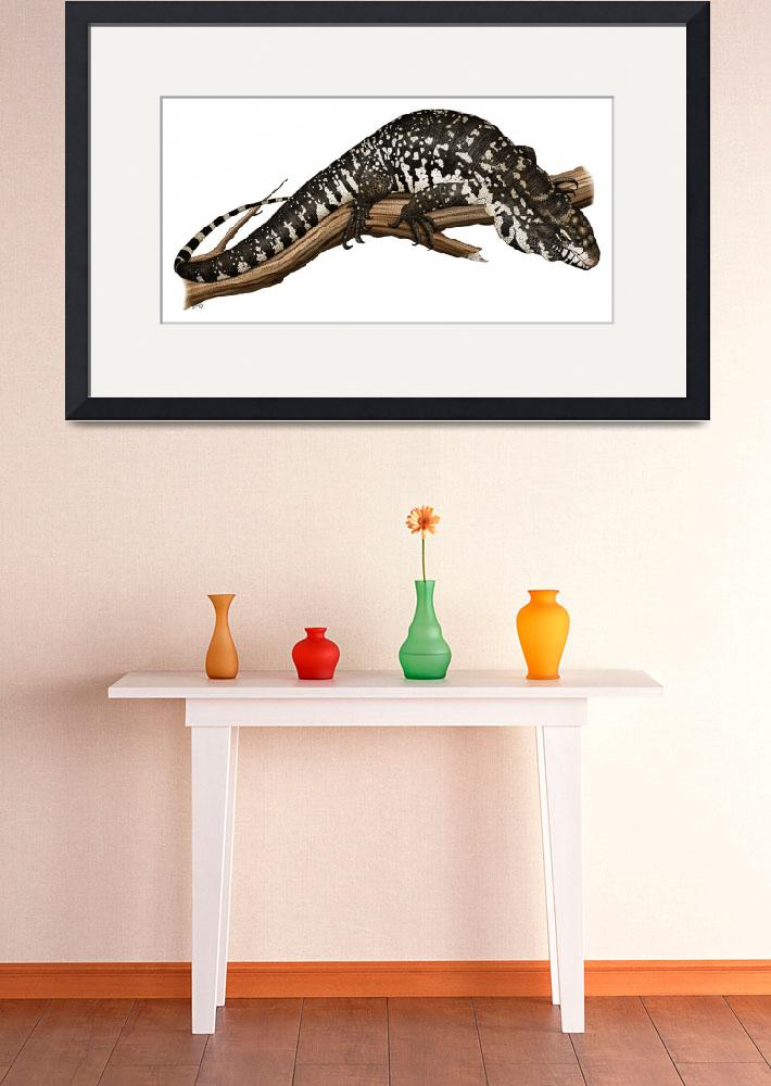 """Argentine Black & White Tegu&quot  (2009) by inkart"