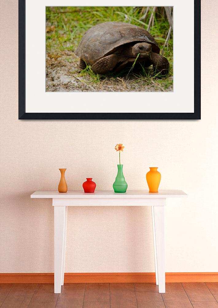 """Gopher Tortoise Eats Lunch&quot  (2012) by ValeriesGallery"