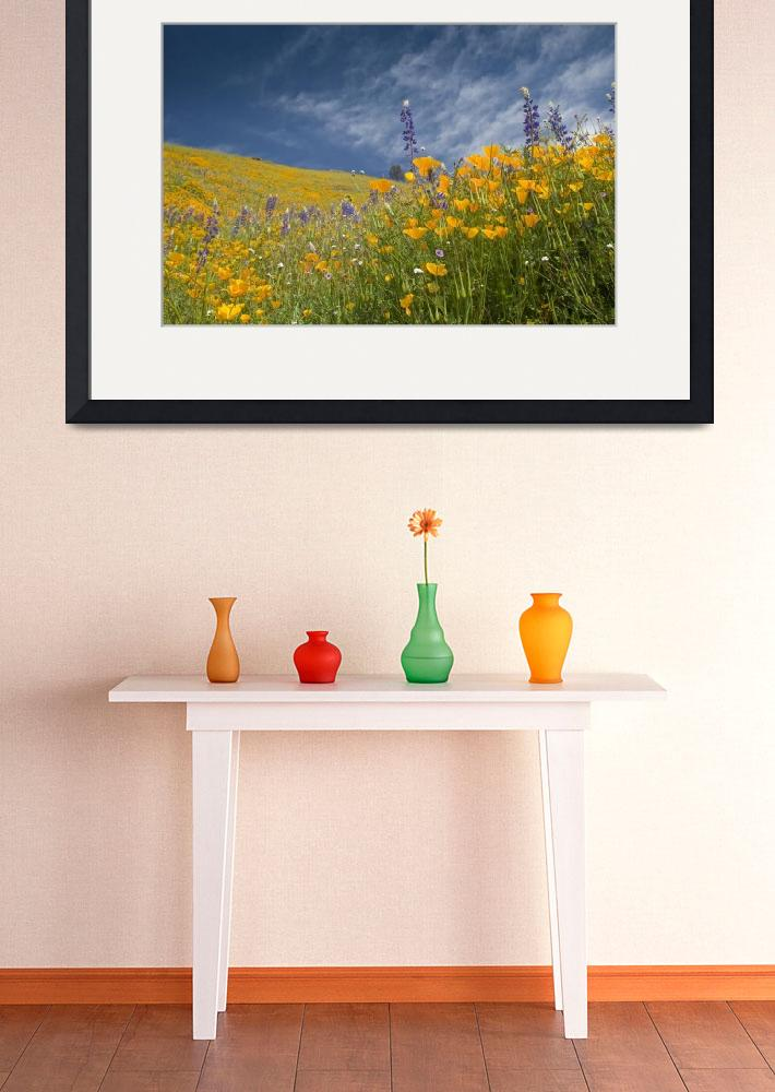 """Mount Murphy Poppies One&quot  (2008) by SederquistPhotography"