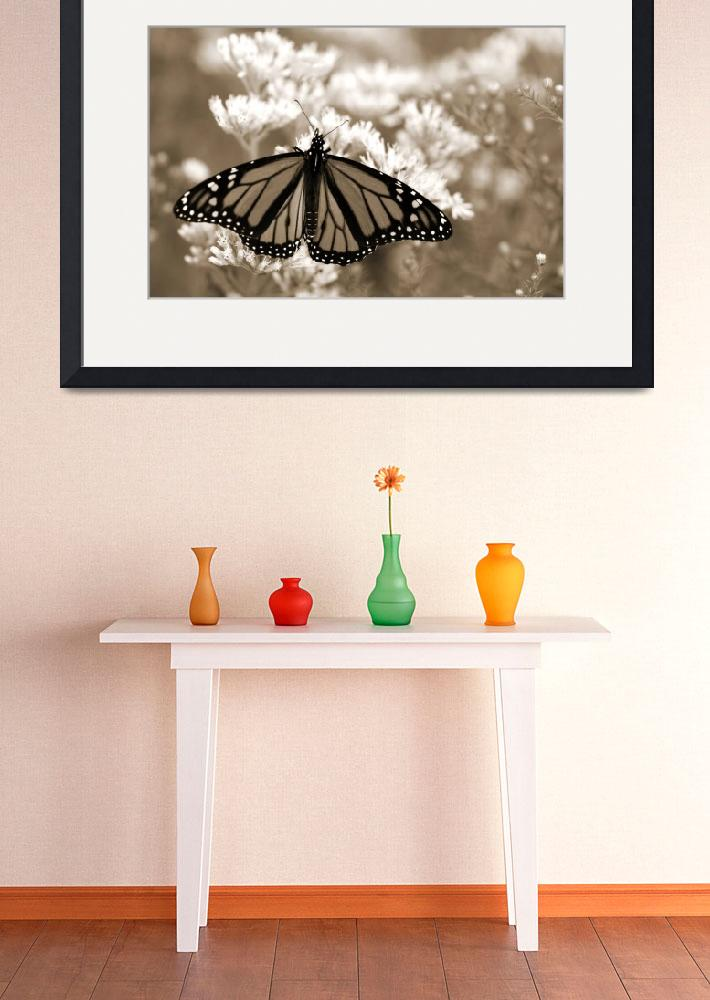 """Monarch In Sepia&quot  (2006) by Erica_Marshall"