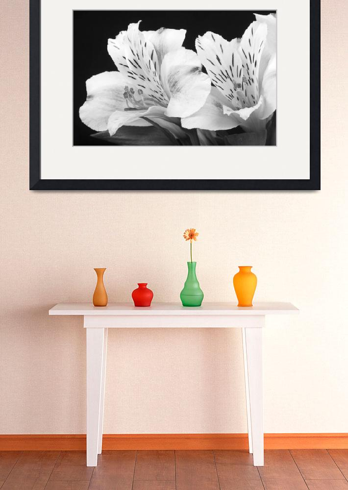 """Peruvian Lilies Botanical Black and White Print&quot  (2011) by lightningman"