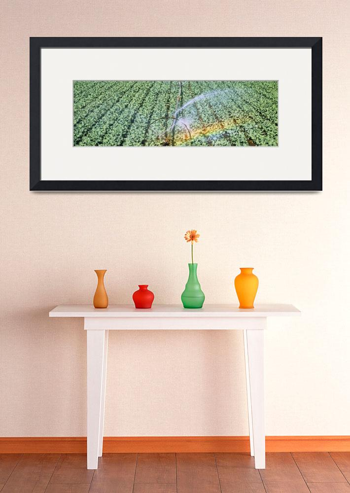 """Irrigation Broccoli Crop OR&quot  by Panoramic_Images"