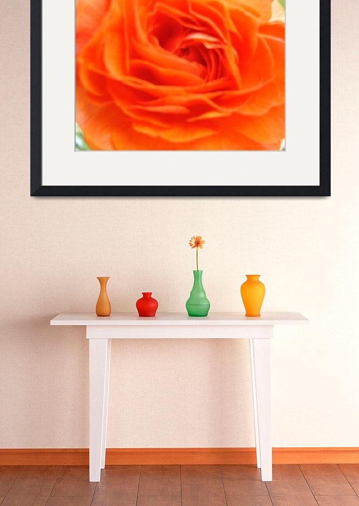 """Orange Rose&quot  (2010) by bicycleguy"