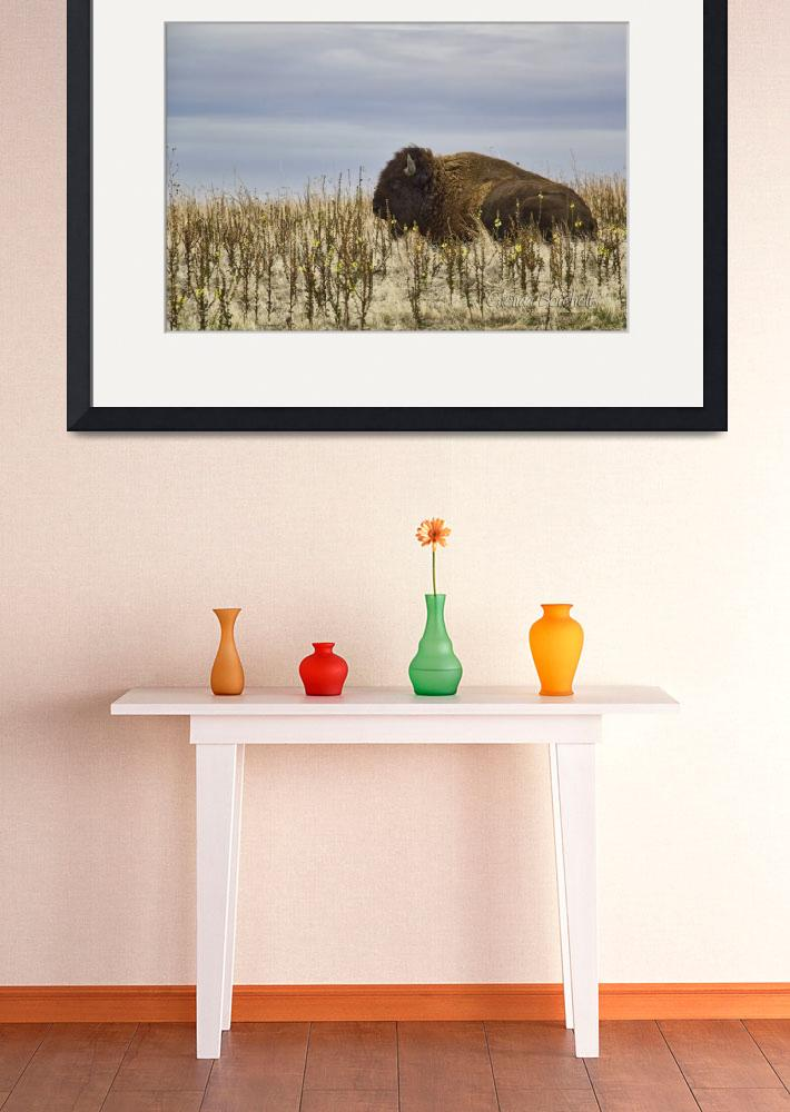 """American Bison&quot  (2012) by GlendaBorchelt"