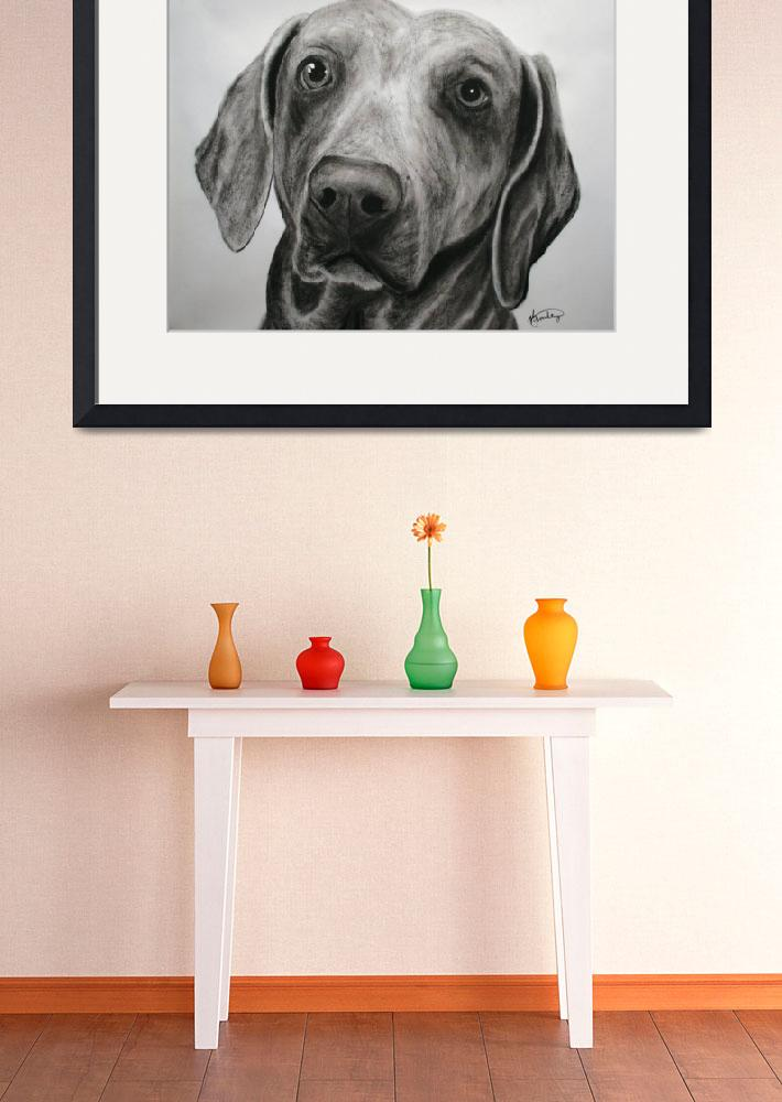 """Weimaraner I&quot  (2009) by K_Brook_Photography"