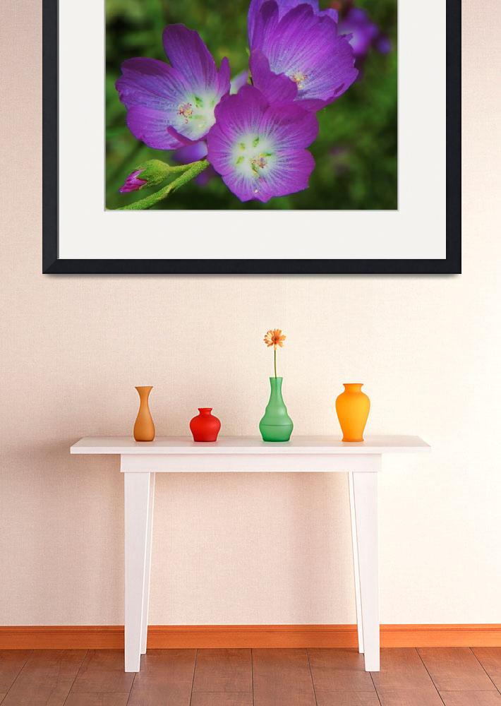 """Botanical - Winecups - Outdoors Floral&quot  by artsandi"