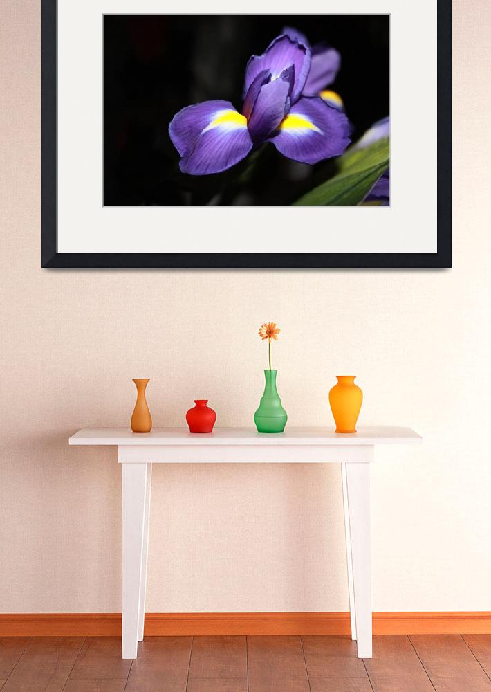 """20 Floral-Iris 1&quot  (2008) by willifindunow"