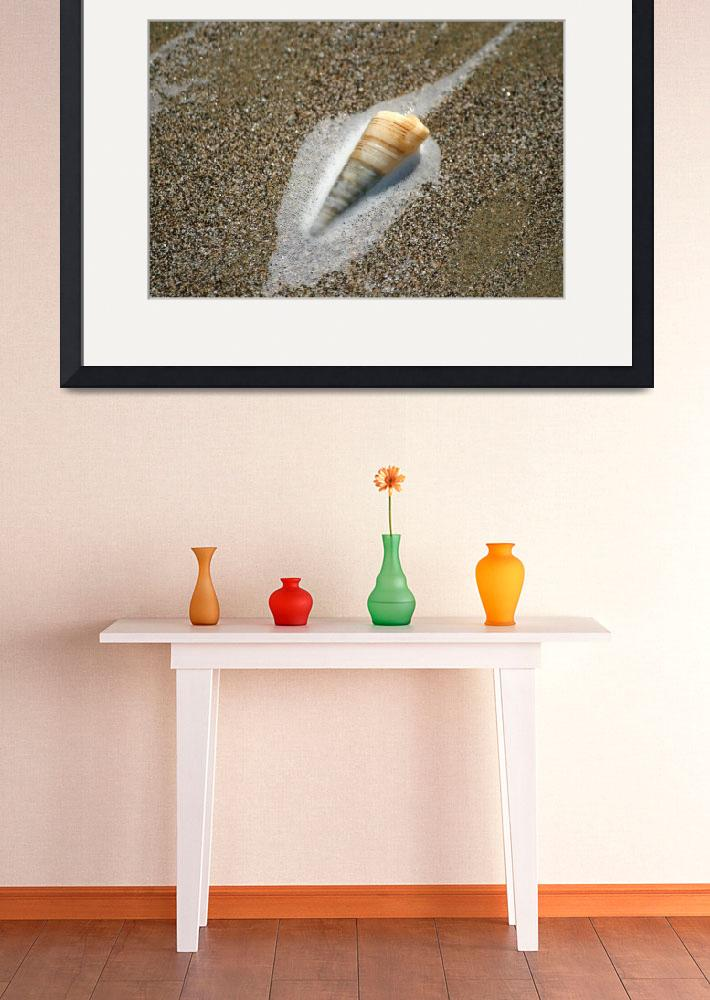 """Dunedin Moeraki Beach Shell&quot  by DRW"