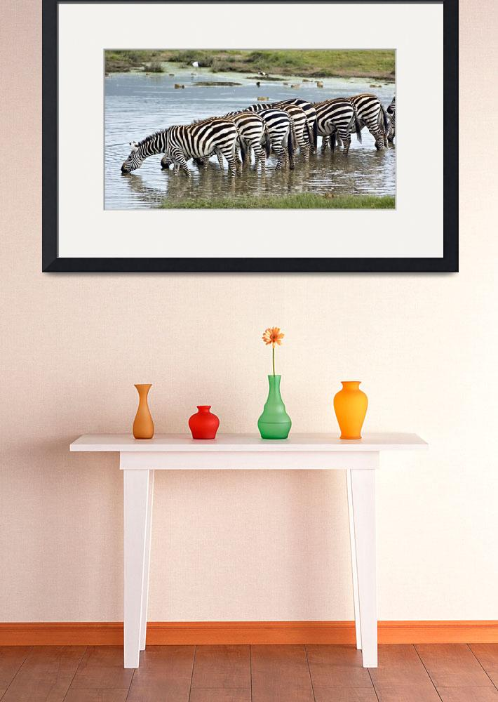 """Herd of zebras drinking water in a lake&quot  by Panoramic_Images"