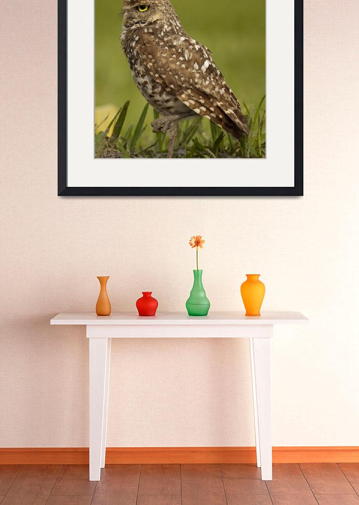 """Burrowing Owl&quot  (2009) by eKIMPhotoz"