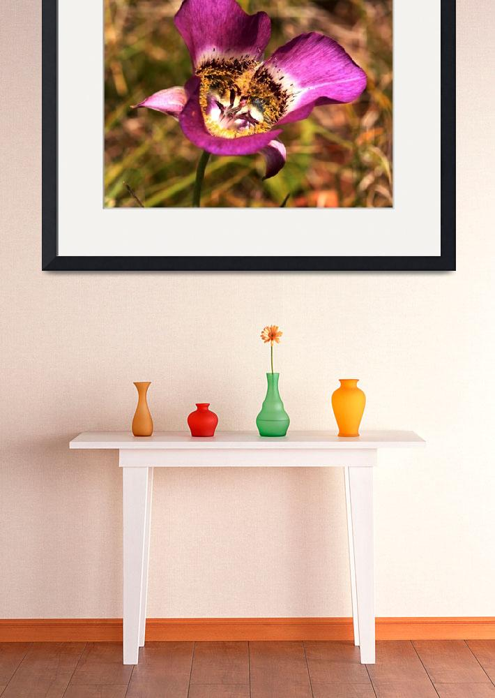 """AZ Wildflower  - Mariposa Tulip&quot  (2009) by rayjacque"