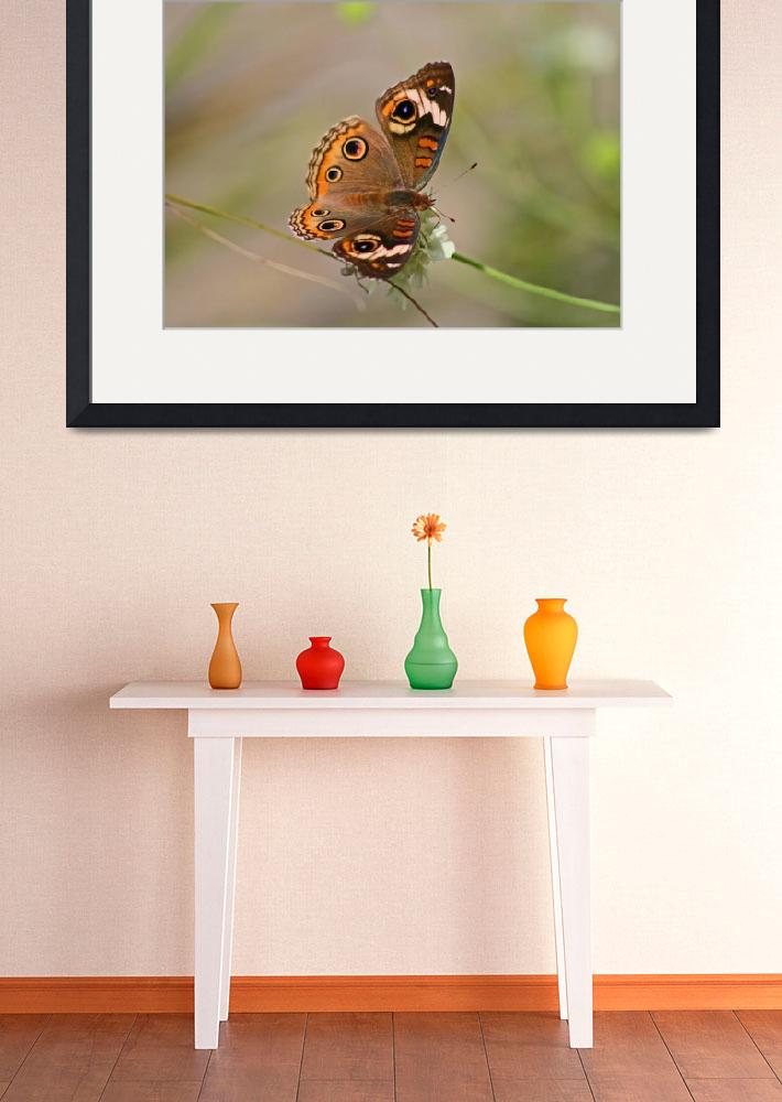 """Butterfly  Common Buckeye&quot  (2011) by KsWorldArt"