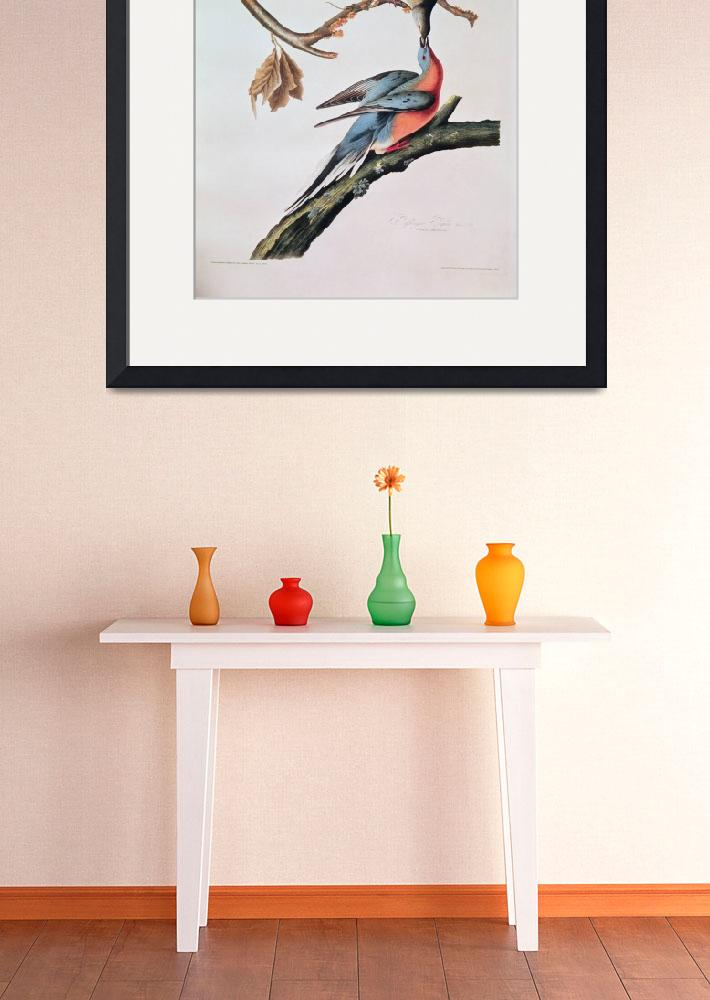 """Passenger Pigeon by John James Audubon&quot  by fineartmasters"