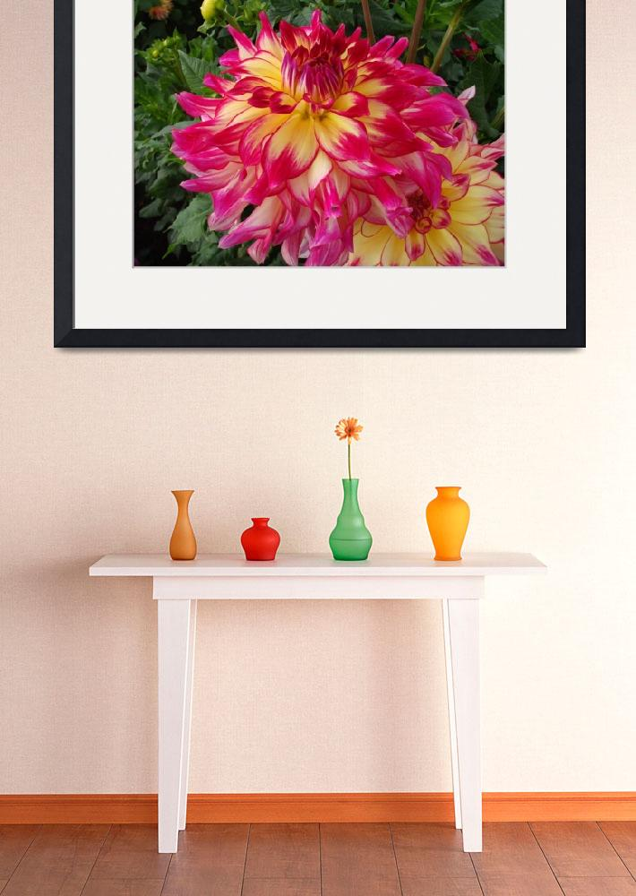 """Pink & Yellow Dahlia&quot  (2013) by StephanieBrower"