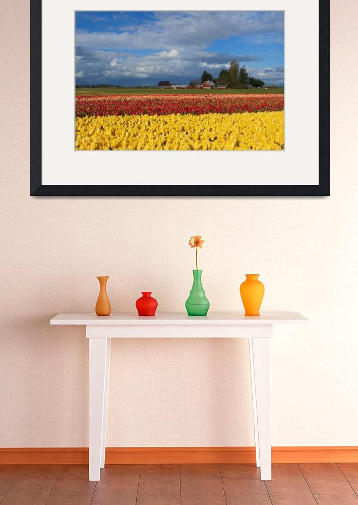 """Red Barn Tulip Farm&quot  (2015) by Dawsonimages"