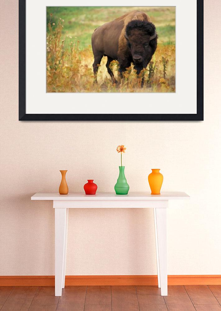 """American Bison Bull&quot  (2010) by rdwittle"