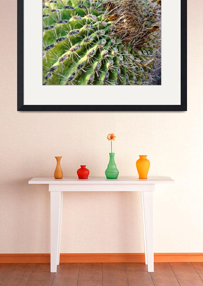 """Barrel Cactus&quot  (2007) by MyHartArt"