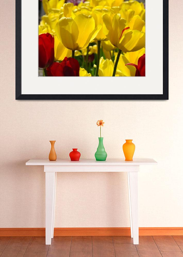 """TULIPS Garden Spring Yellow Tulip Flowers Artwork&quot  (2010) by BasleeTroutman"