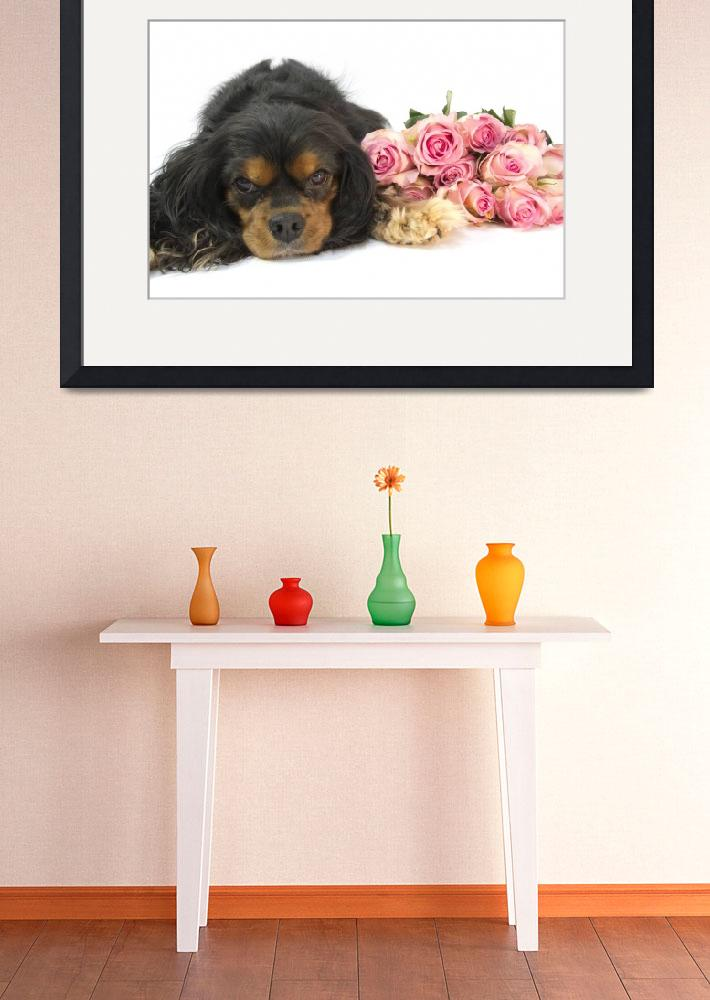 """A Cavalier King Charles Spaniel With Pink Roses&quot  (2012) by Daphsam"