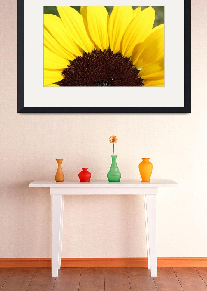 """Sunflower&quot  (2011) by Albertphoto"
