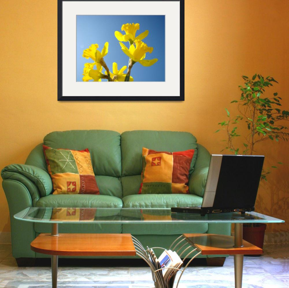 """Floral Fine Art Photograhy Spring Daffodils Sky&quot  (2010) by BasleeTroutman"